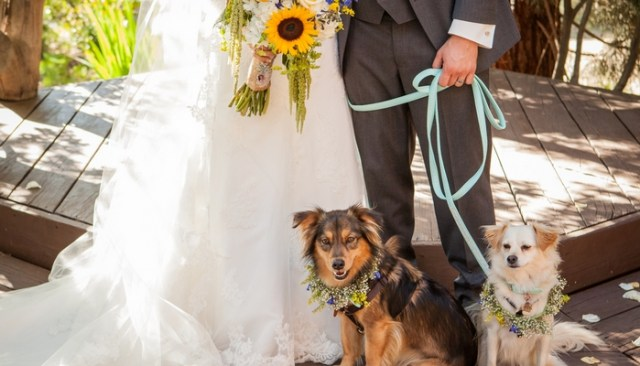 Money Saving Secret Revealed About Dogs Filming Weddings