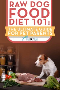 Raw Dog Food Diet for Dogs 101