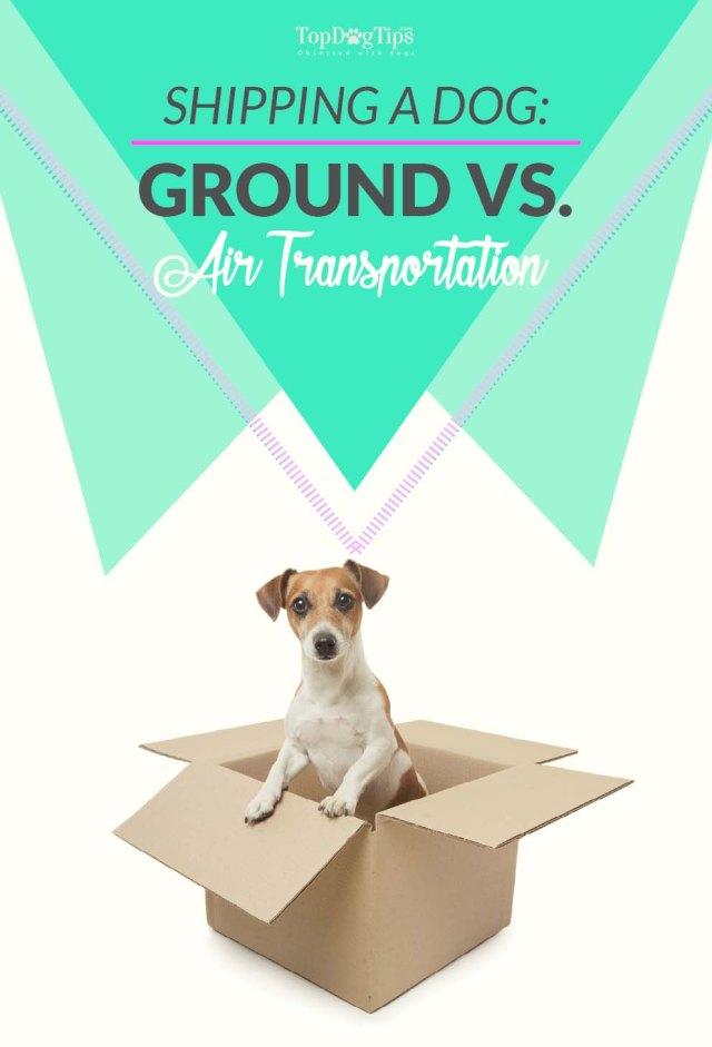Shipping a Dog - Ground vs Air Transportation