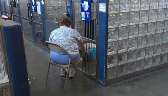 Simple Task Makes a HUGE Difference for Shelter Dogs