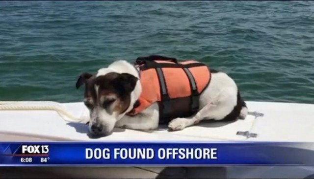 This Dog Swam In the Gulf of Mexico for 3 Hours Before Being Rescued