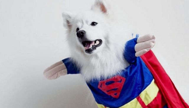 Wait Until You See These Amazing Dog Super Hero Photos
