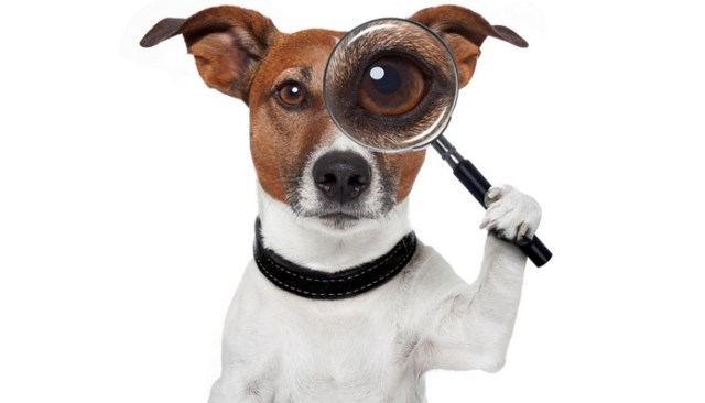 What Is This 'Pet Detective' Doing to Help Dog Owners