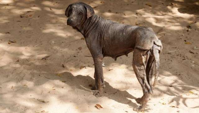 You've Got To See This Amazing Dog Transformation to Believe It
