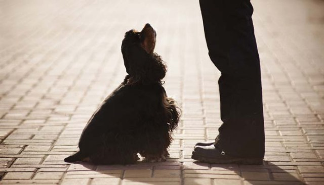 Additional Tips to Stop Dog Barking