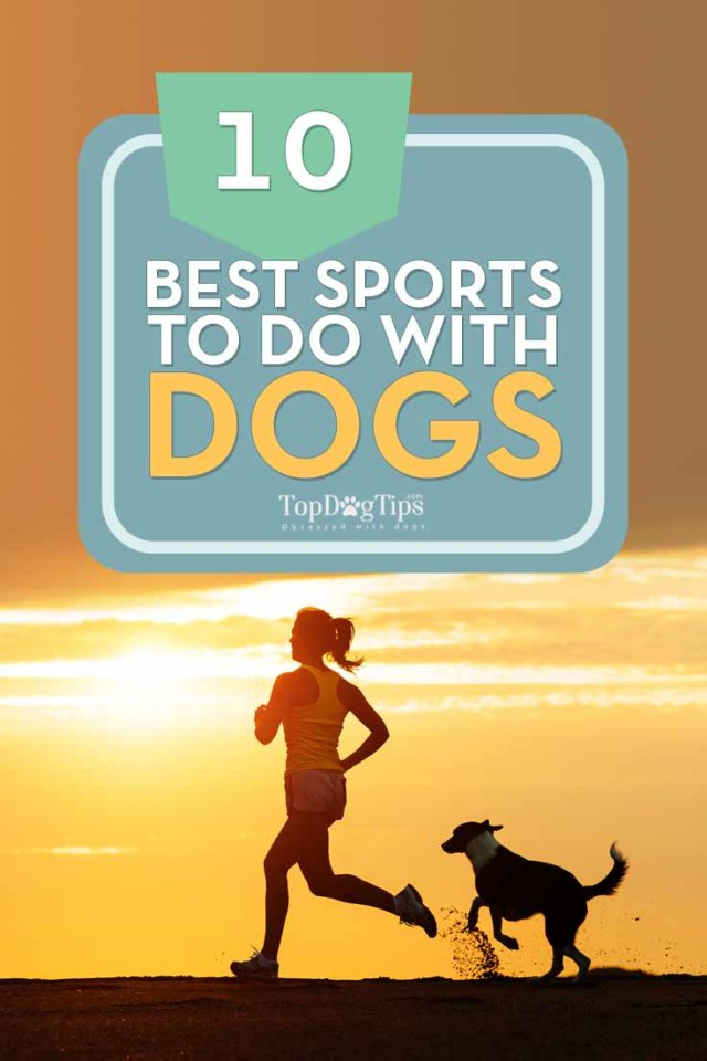 Best Sports to Do with Your Dog