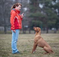 Obedience Trials for dogs