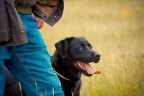 Field Trials training and sport for dogs