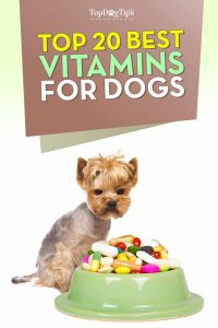 Best Vitamins for Dogs for Pets Optimal Health