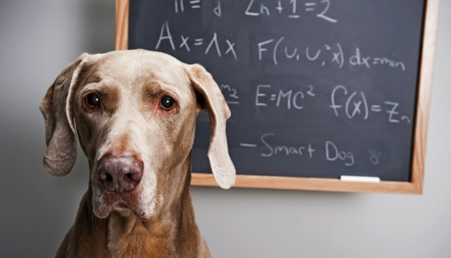 Canine IQ Tests Suggest the Presence of a g Factor