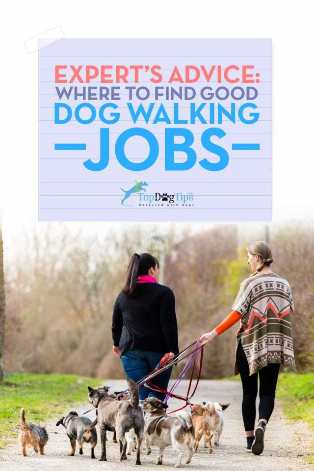 Dog Walker Jobs - Where and How to Find Good Dog Walking Work
