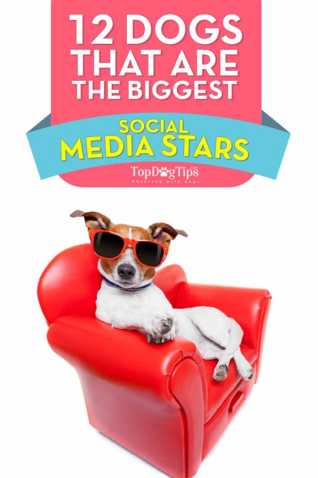 Dogs That Are the Biggest Social Media Stars