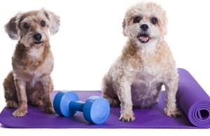 Gym in a Box for Dogs It's Woofonderful