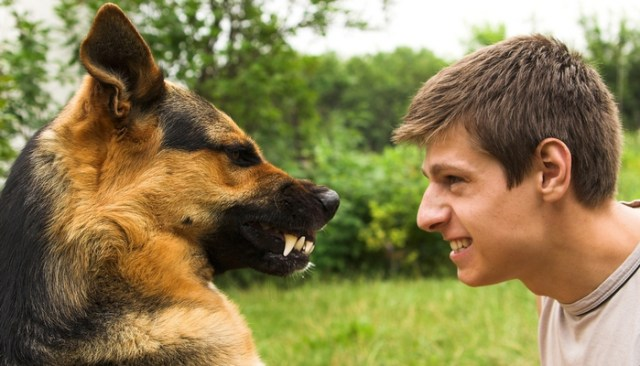 Man Refuses to Do Community Service After Biting His Dog