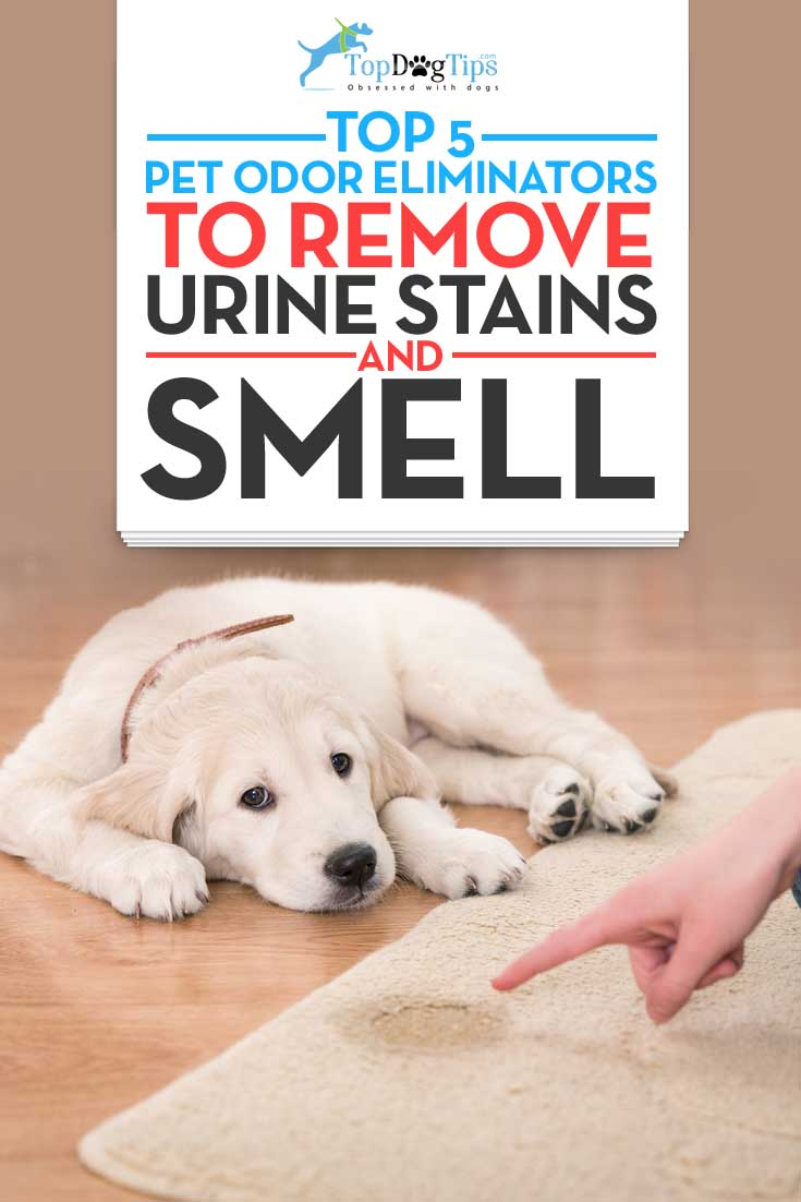 Getting Rid Of Dog Smell Outside