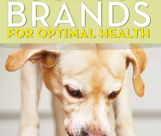 The What Is The Best Dog Food Brand For Health