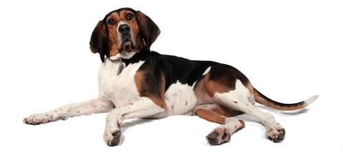 Worst Dog Breeds for First Time Owners