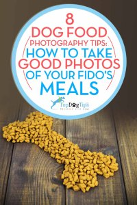Best Dog Food Photography Tips