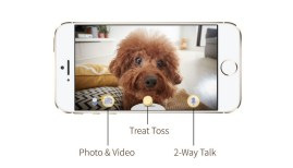 Furbo Allows You To See Your Dog While You're At Work