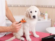 How To Find Local Dog Groomers in Your Area