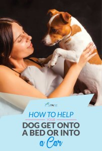 How To Help A Dog Get Onto A Bed or In A Car