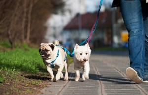 How to Become a Dog Walker