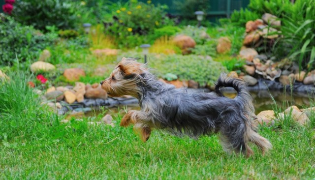How to Create A Backyard Paradise For Your Dog
