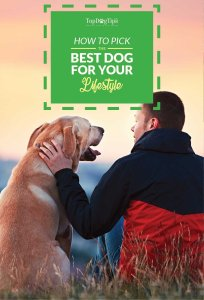 How to Pick the Best Dog