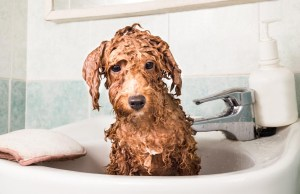 How to bathe a dog video guide
