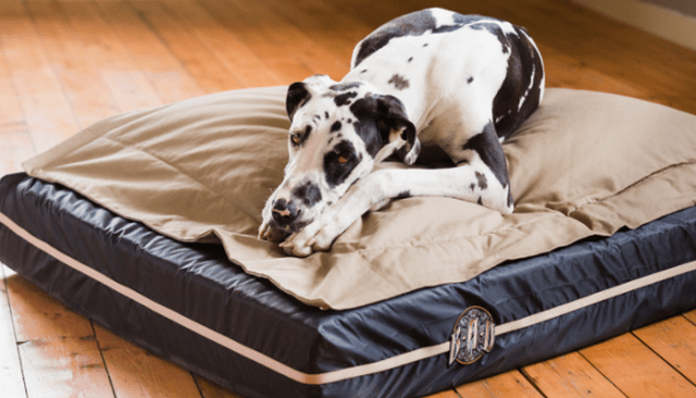 If You Have An Extra-Large Breed You Need A Big Ass Dog Bed