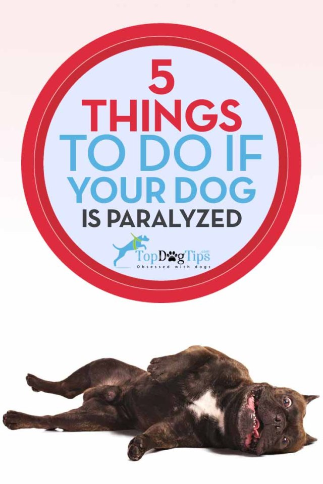 What to Do if Your Dog is Paralyzed