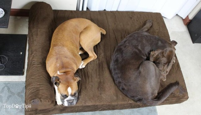 Big Barker Dog Beds Review - Best Dog Bed for Big Dogs