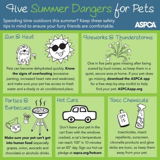 Dog Pool Dangers