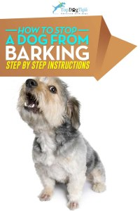 How To Stop A Dog From Barking Video
