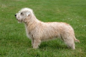 Low-Cost Dog Breeds