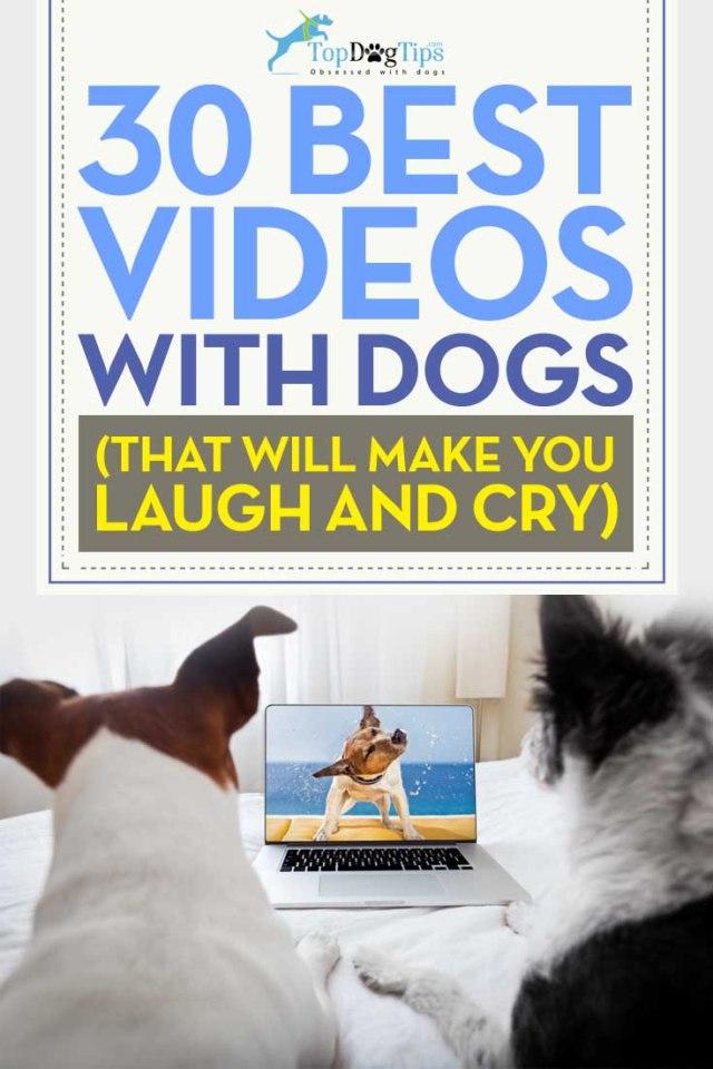 Top Best Dog Videos
