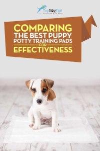 Top Best Puppy Potty Training Pads Comparison