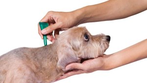 Fleas and Parasites Costs: $120-$600 Annually