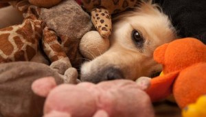 Dog toys collars leashes costs