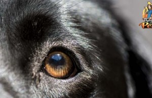 How Effective and Beneficial Are Dog DNA Tests?