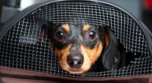 How to Choose the Best Crate Types for Dogs in Your Home