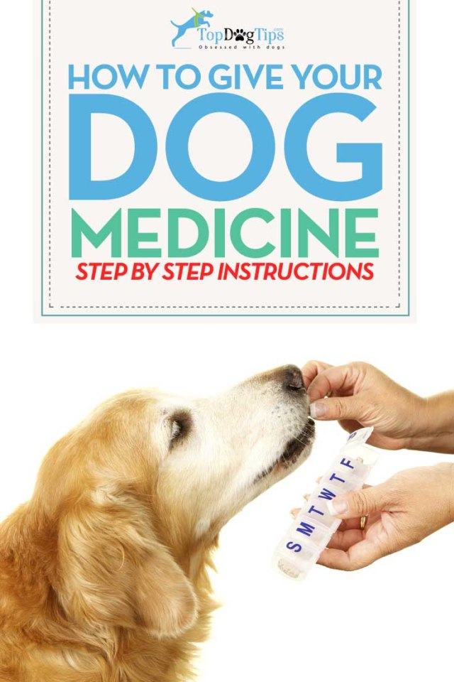 Tips on How To Give A Dog Medicine