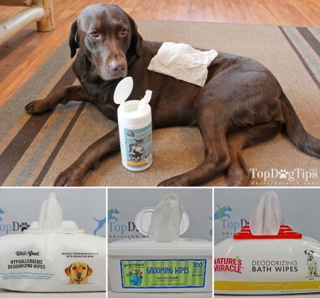 Using the Best Dog Grooming Wipes On-the-Go