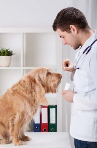 Antihistamines May Help to Relieve Itchiness in Dogs
