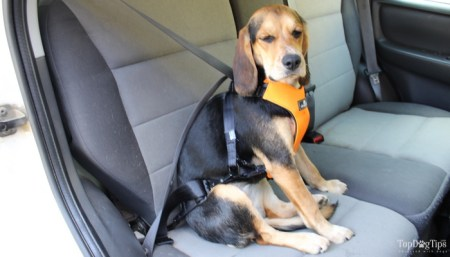 How to Pick a Safe Dog Harness for Car Travel