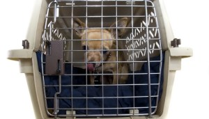 Crate Training Dogs