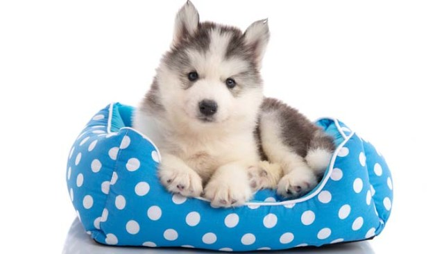 Dog beds and crates for puppies