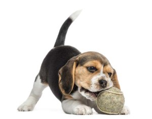 Dog toys for a new puppy