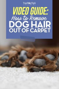 How To Get Dog Hair Out of Carpet Video