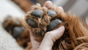 Preventing Dirty Paws